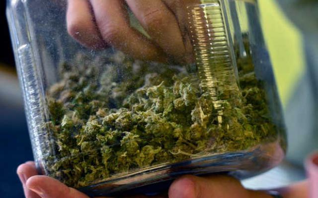 mile-high-comeback-of-cannabis-free-film-movie