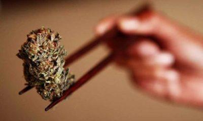marihuana-dieta-gastro-faza-otyłość