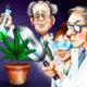 marihuana-badania