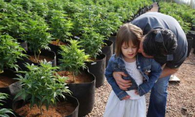 medyczna-marihuana-lekiem-na-padaczke