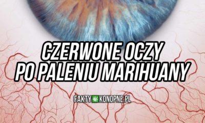 Czerwone oko po paleniu marihuany
