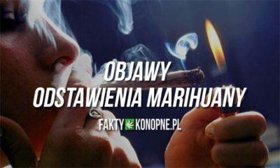 Objawy i skutku odstawienia marihuany