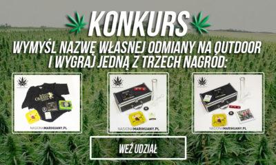 konkurs-nasiona-marihuany-fakty-konopne