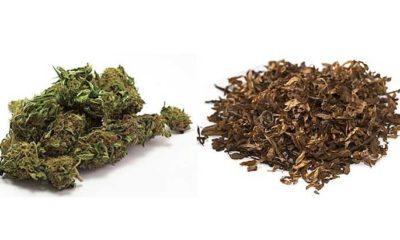 marihuana i tytoń