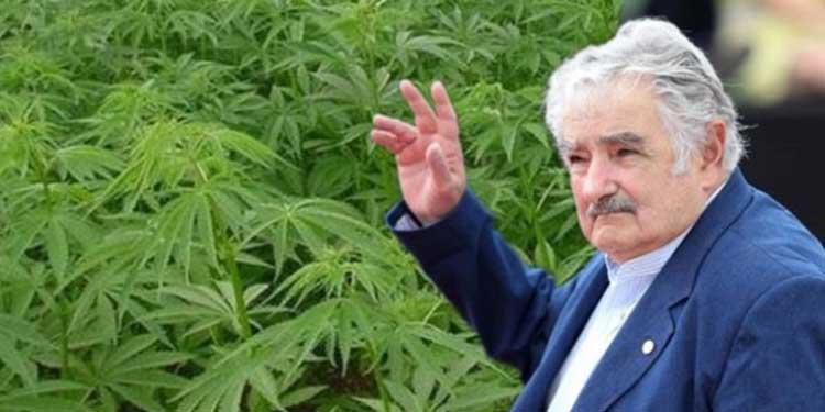 w 2016 roku Urugwaj rozpoczene sprzedaż marihuany