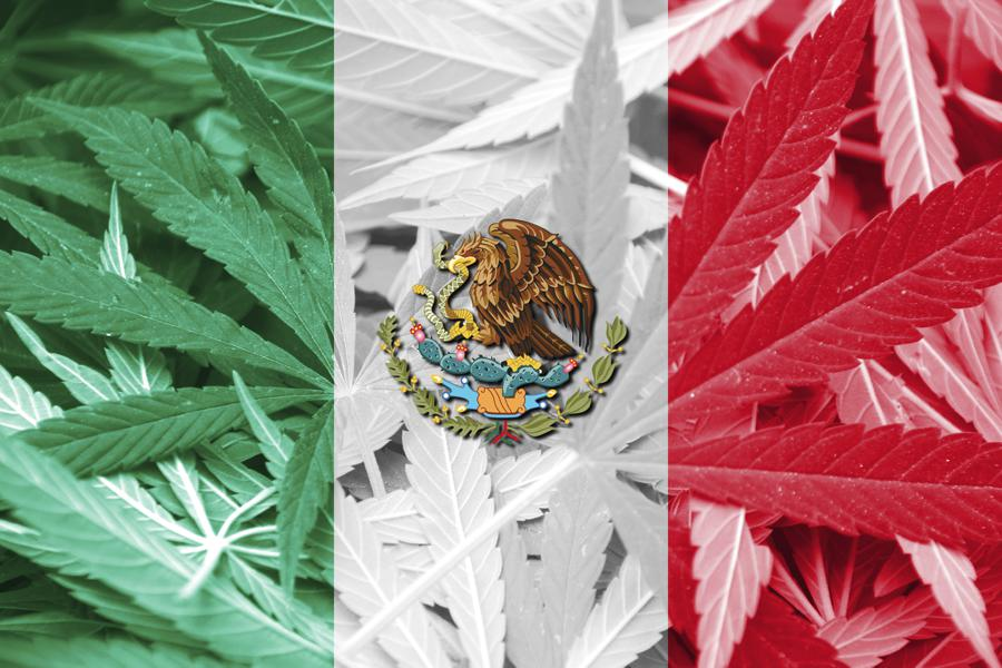 prezydent meksyku chce legalizacji medycznej marihuany