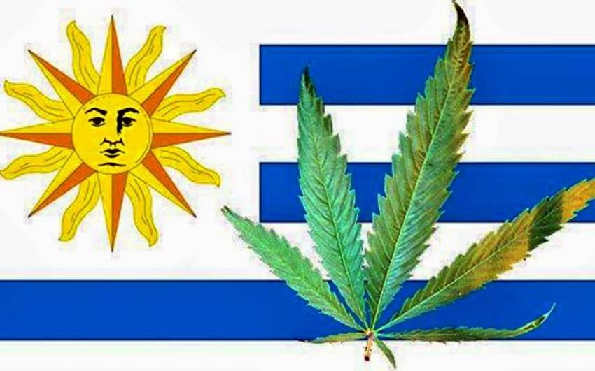 Urugwaj rozpoczyna legalną sprzedaż marihuany do celów medycznych i rekreacyjnych