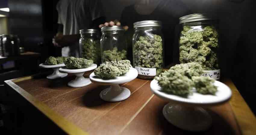 efekty legalizacji marihuany