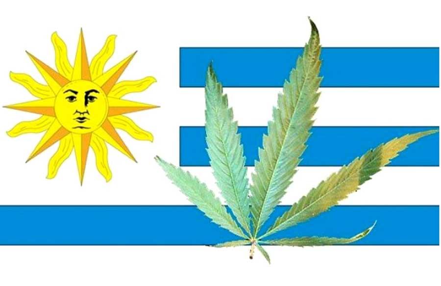 sprzedaż legalnej marihuany w Urugwaju rozpocznie się w lipcu