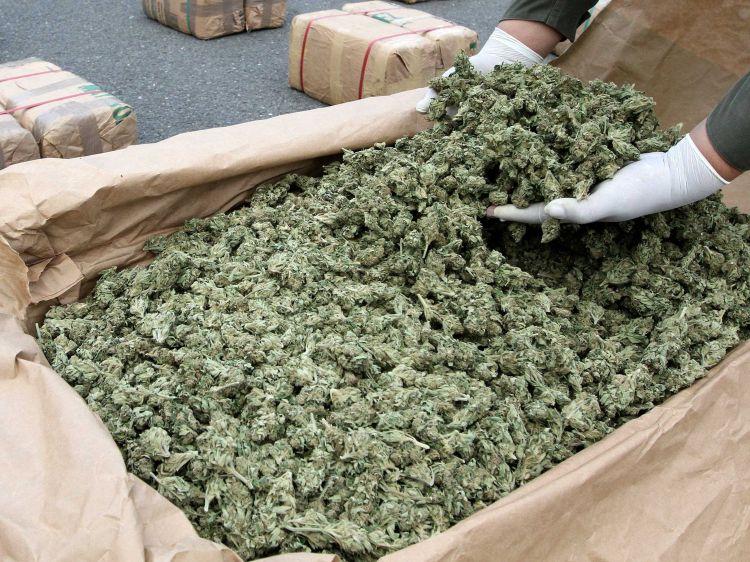 Nadwyżka marihuany w stanie Oregon
