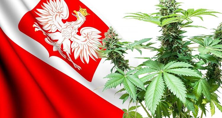 Nie będzie legalizacji marihuany w Polsce - Fake News