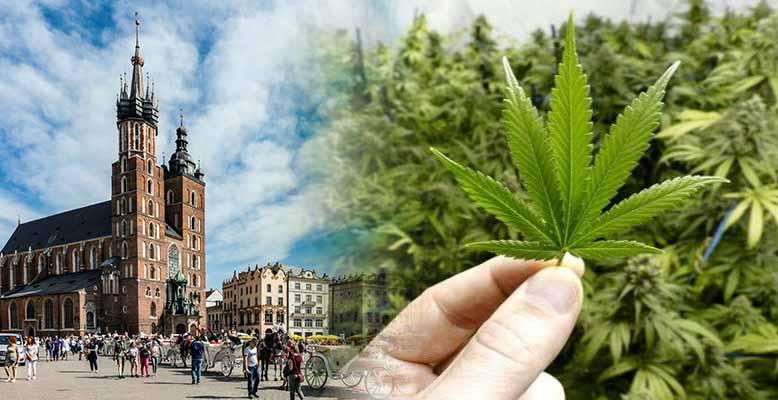 Kandydat na Prezydenta Krakowa chce zdekryminalizować marihuanę dla mieszkańców