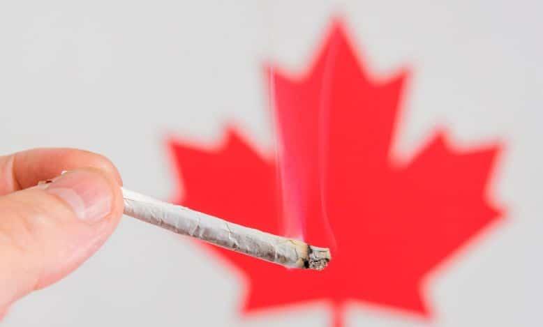 Popyt i podaż na marihuanę w Kanadzie