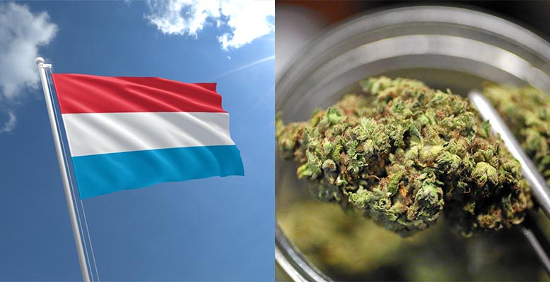Luksemburg legalizuje marihuanę rekreacyjną
