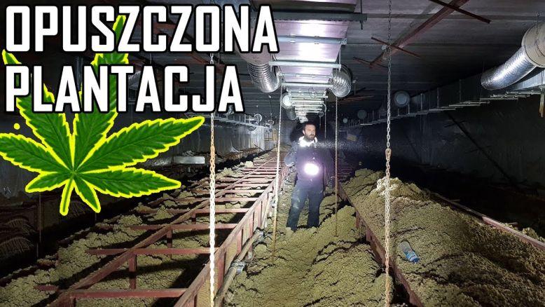 wyprawa do opuszczonej fabryki marihuany pod pralnią chemiczną
