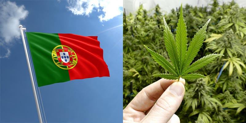 Portugalia rozważa legalizacje marihuany