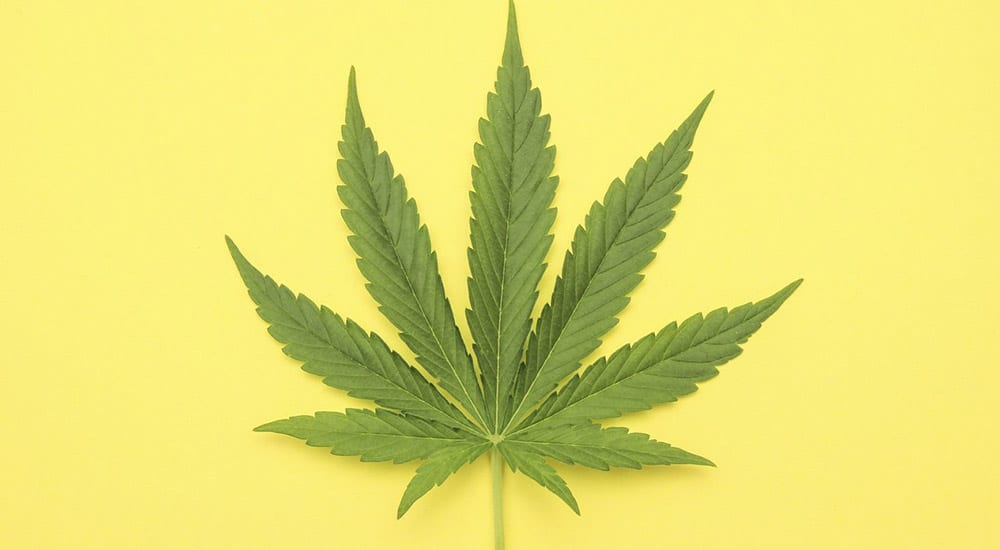 Używanie marihuany w młodości związane z ryzykiem depresji w dorosłości