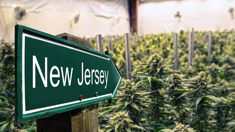 Dziś w New Jersey odbędzie się głosowanie nad legalizacją marihuany do celów rekreacyjnych