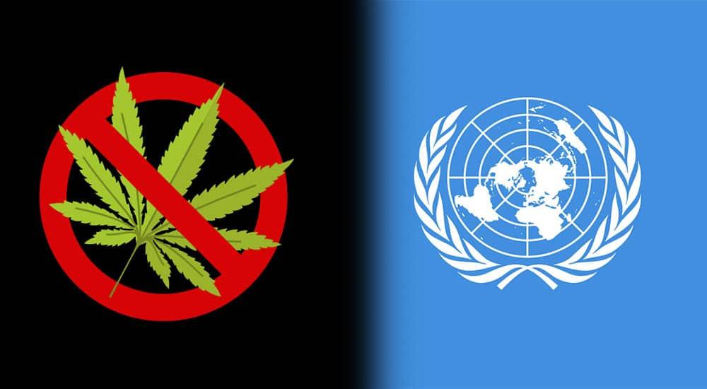 ONZ sprzeciwia się legalizacji marihuany. W najnowszym raporcie stwierdza, że marihuana uzależnia i jest szkodliwa