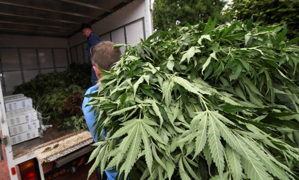 Tajlandia wykorzysta skonfiskowaną marihuanę do produkcji leków