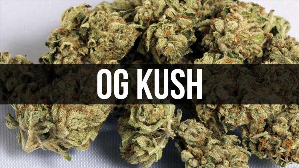 OG Kush - legendarne odmiany marihuany