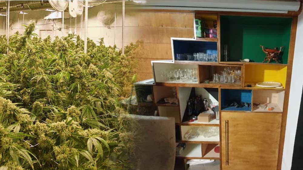 Łódź: uprawa marihuany ukryta za regałem