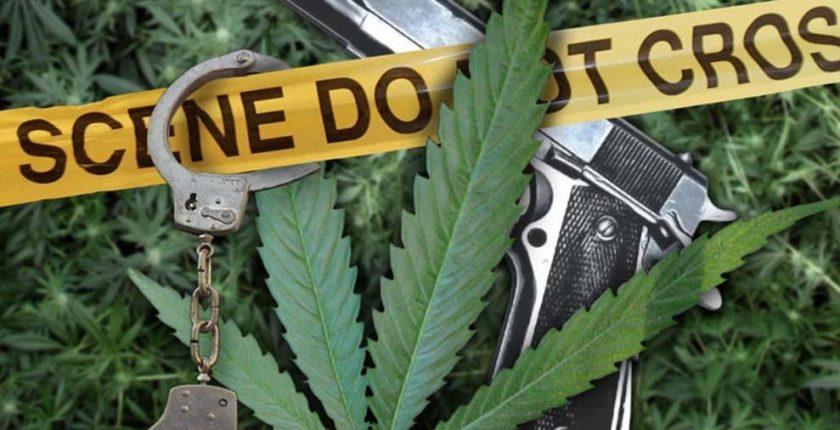 Legalizacja marihuany w Kolorado i Waszyngtonie nie wpłynęła na przestępczość