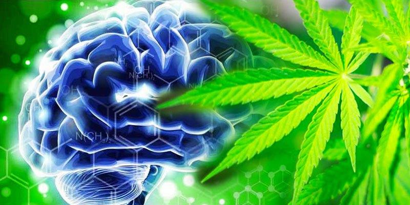 Marihuana lekiem na demencję?