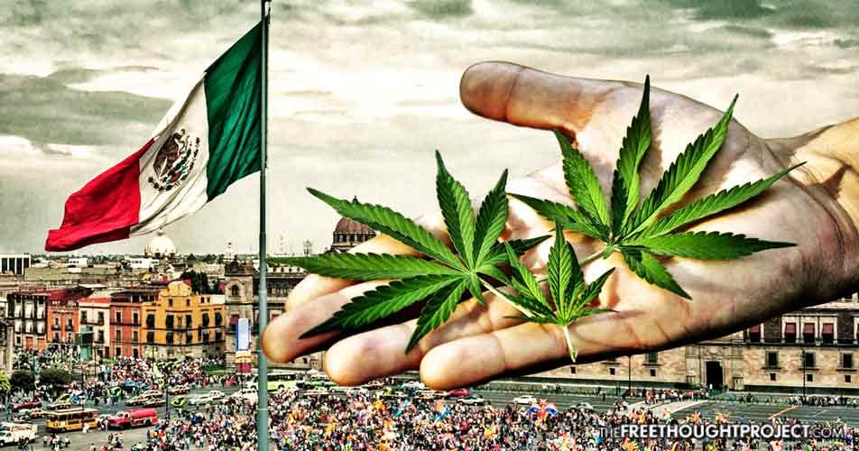 Legalizacja marihuany w meksyku
