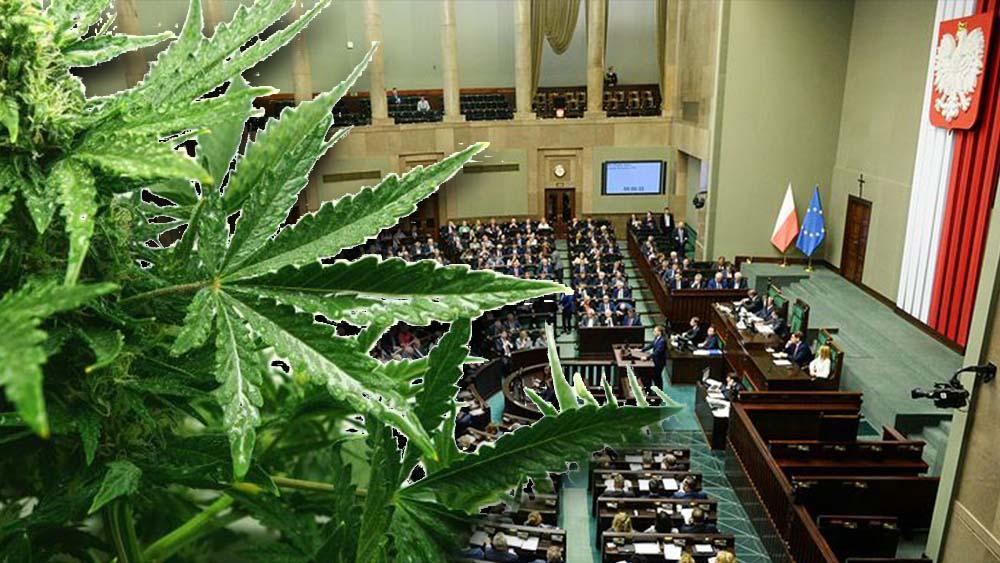 Parlamentarny zespół ds. legalizacji marihuany już ruszył