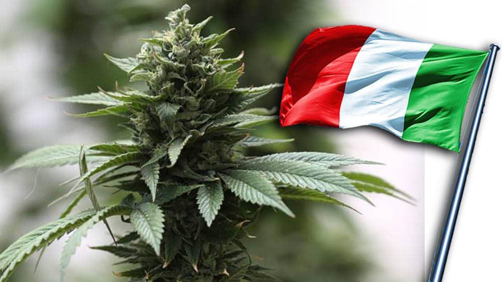 Włochy - uprawa marihuany na własny użytek nie jest przestępstwem - orzekł sąd najwyższy
