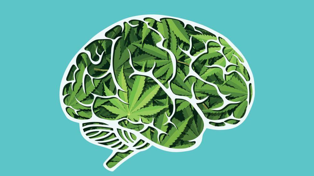 Czy marihuana ogłupia? Najnowsze badania sugerują, że nie