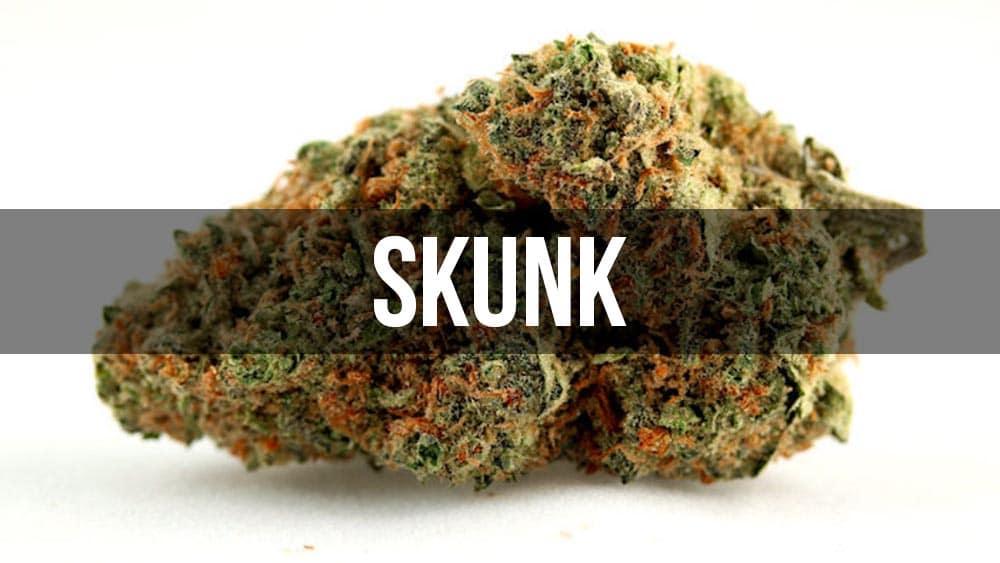 Skunk - historia odmiany marihuany