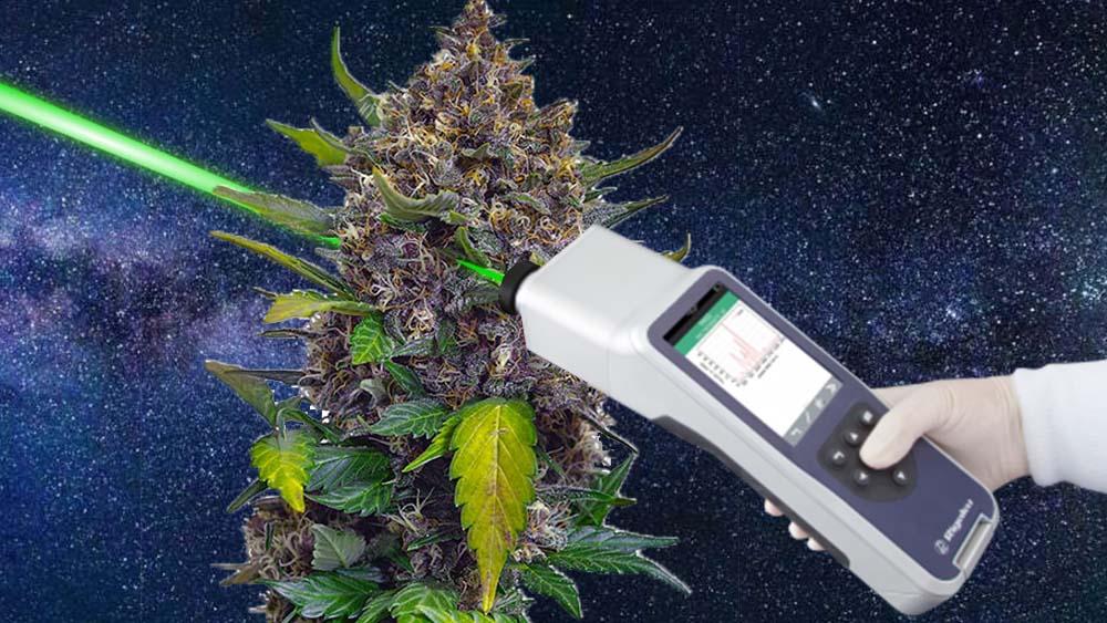 Raman Spekrtomentr odróżni susz CBD od marihuany