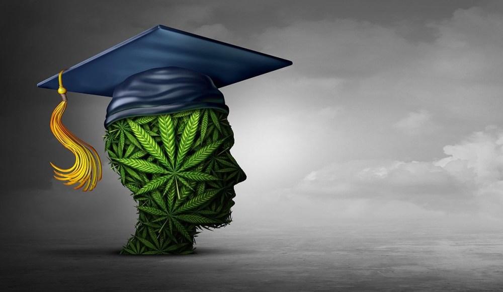 Magister marihuany - nowy kierunek studiów na uniwersytecie w Kolorado