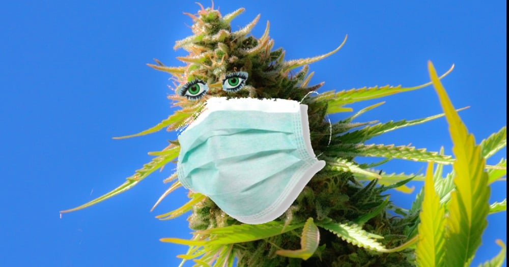 Czy pacjenci zarażeni koronawirusem covid-19 mogą używać marihuany?