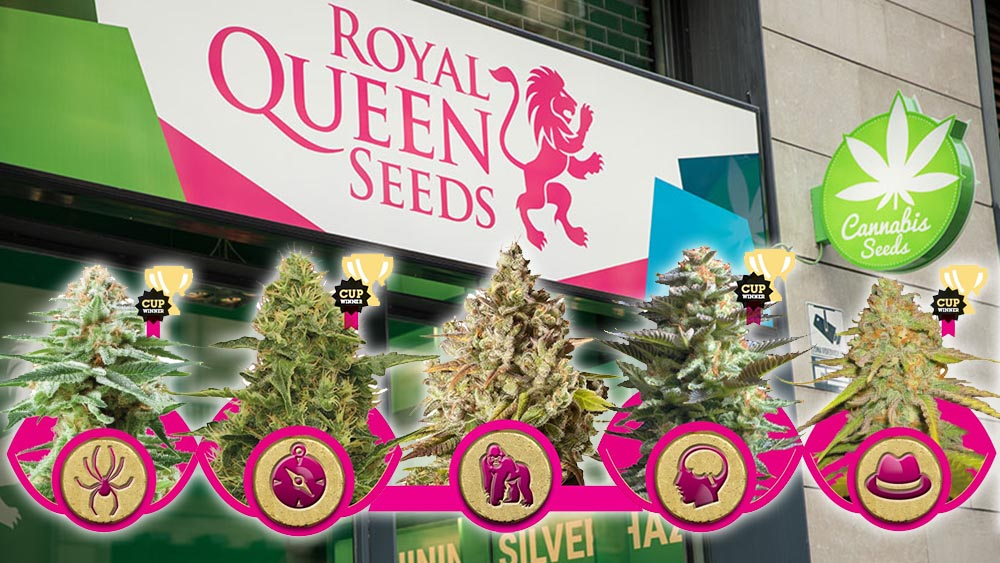 Feminizowane nasiona marihuany od Royal Queen Seeds