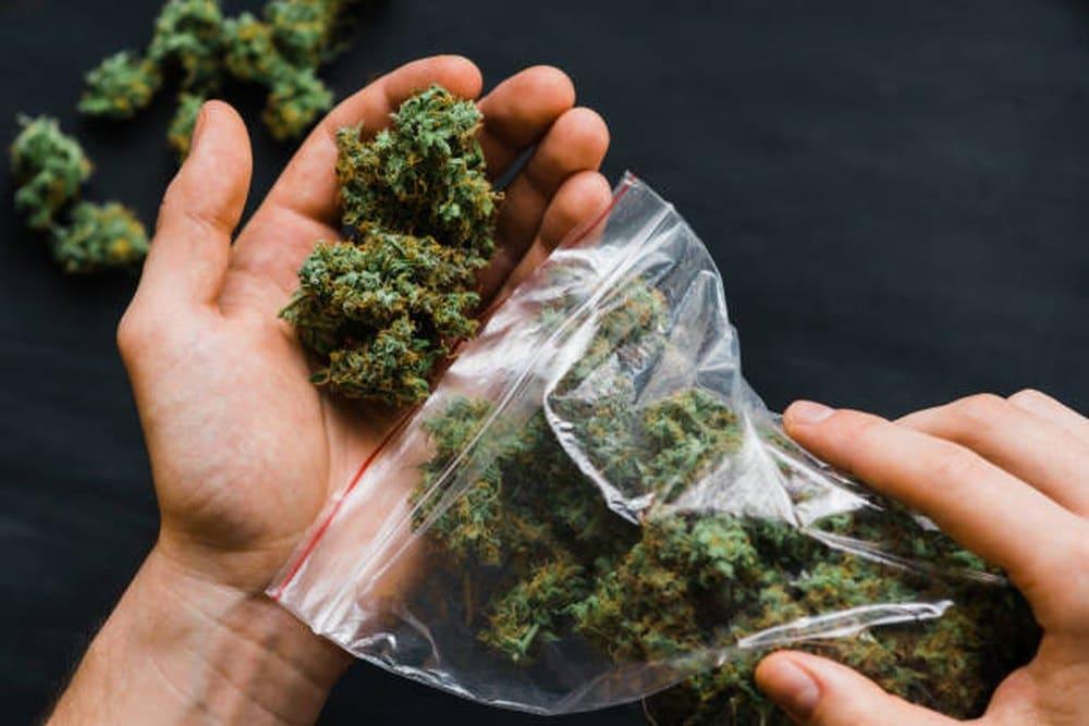 Makrodawkowanie marihuany - co to jest i czym różni się od mikrodawkowania?
