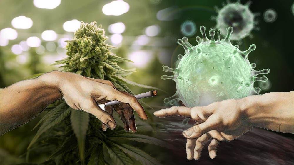 Palenie jointów a koronawirus - to pytanie jest hitem internetu