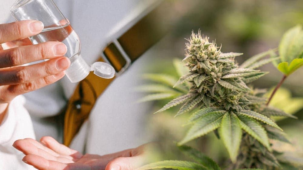 Producenci marihuany będą produkować środki do dezynfekcji rąk