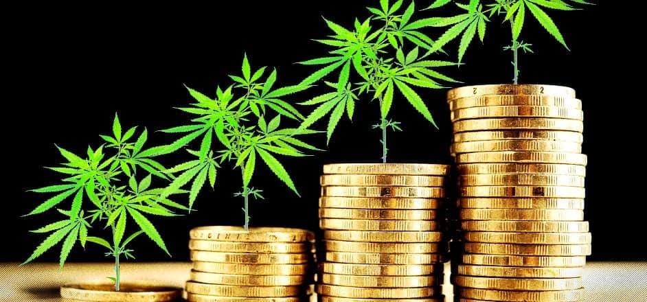 Wpływ koronawirusa na legalizację marihuany