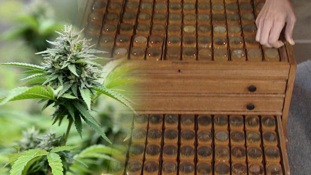 Antyczna szafka z lekami, w której brakuje medycznej marihuany