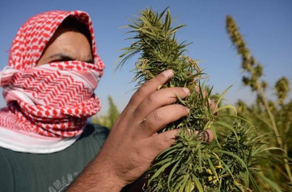 Liban zalegalizował uprawy medycznej marihuany, aby przetrwać kryzys gospodarczy
